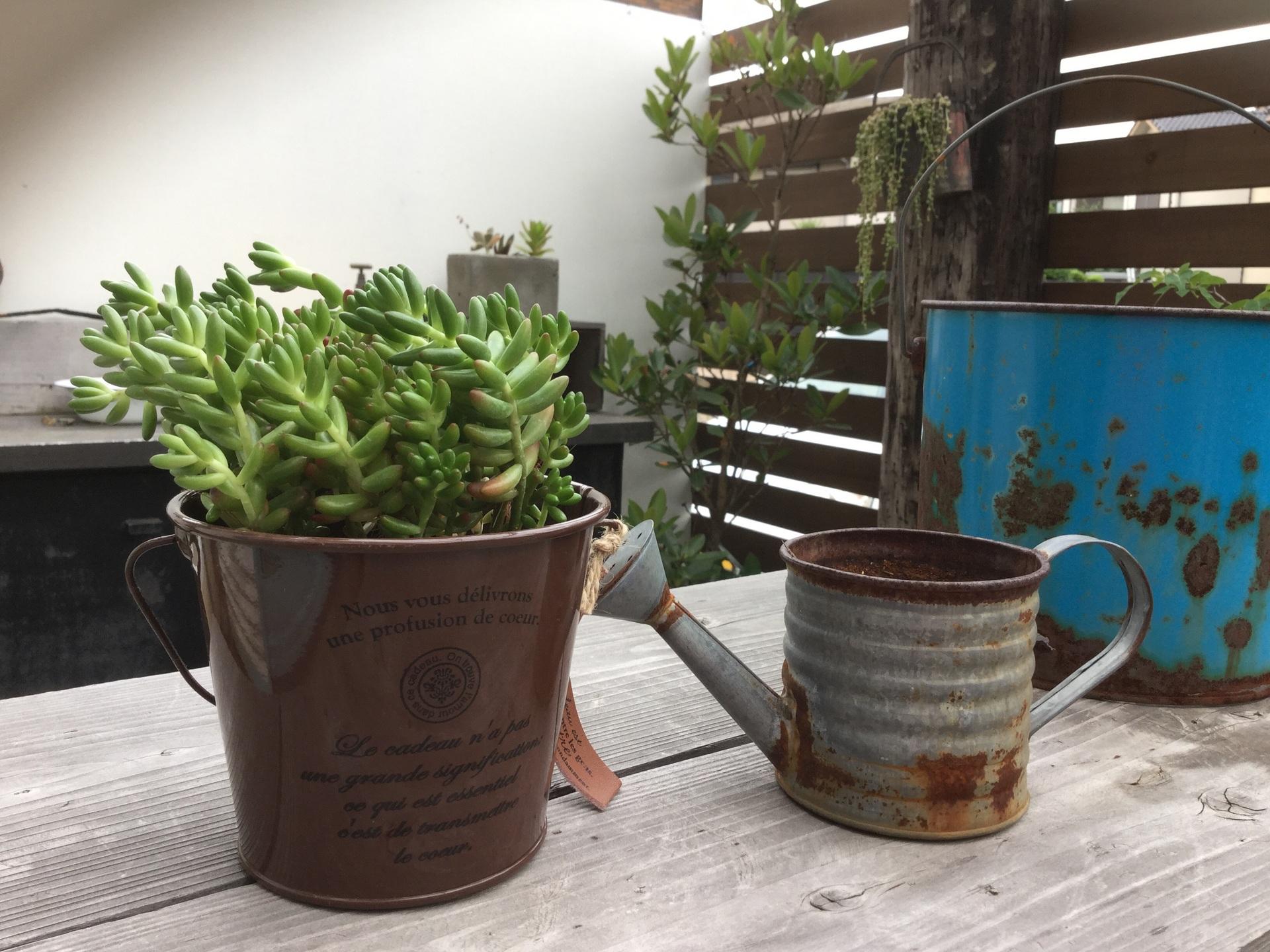 AFROの家で 豆もやしごはん